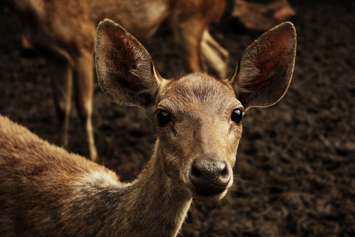 Photo by Fayez (we know- the Rusa deer are adorable-!)